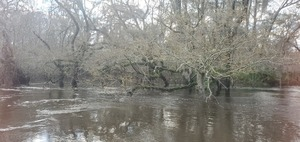 [Withlacoochee River coming in, 09:13:35, 30.8469839, -83.3477638]