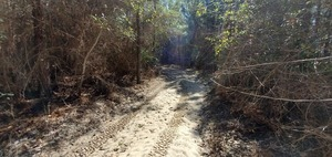 [Access woods road, 11:28:25, 30.8159674, -83.4243390]