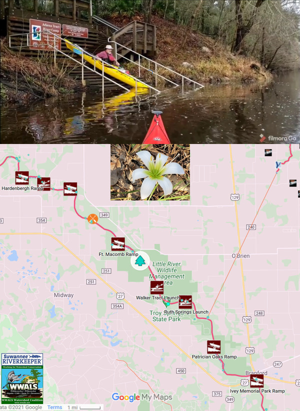 [Adams Tract River Camp, Spring lily, map, Suwannee River Wilderness Trail]