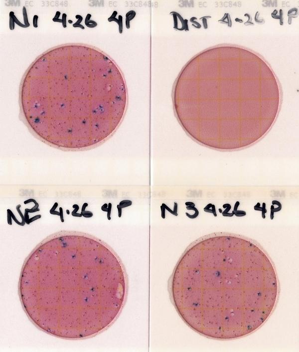 [Nankin Plates 2021-04-26]