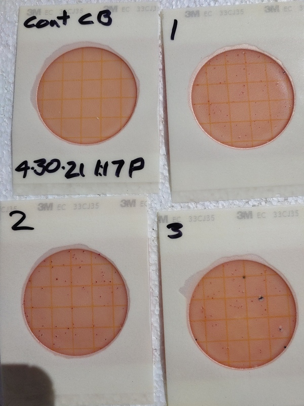[66 cfu/100 mL: only two E. coli colonies]