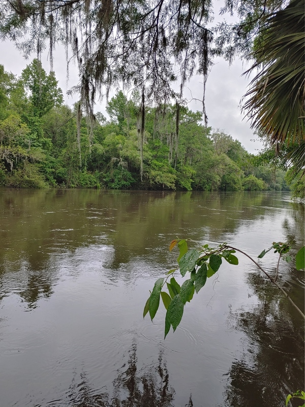 [Still high Withlacoochee River, Cleary Bluff 2021-05-06]