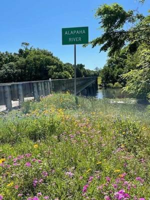 [Alapaha River sign at US 41 bridge]
