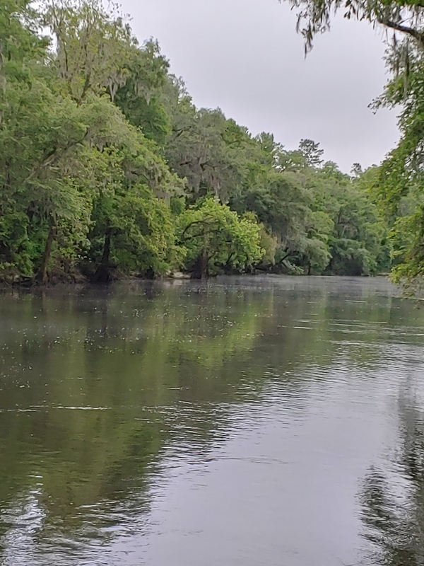 [Cleary Bluff, Withlacoochee River]