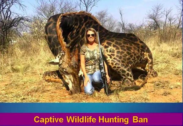 [Captive Wildlife Hunting Ban]