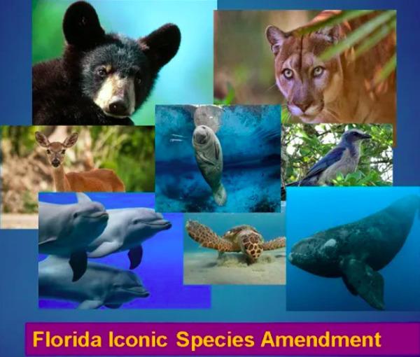 [Florida Iconic Species Amendment]