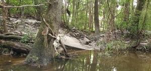 [Tiny creek, 11:32:16, 30.8588120, -83.3164920]
