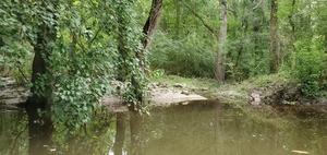 [Tinier creek, 11:42:45, 30.8614910, -83.3182320]