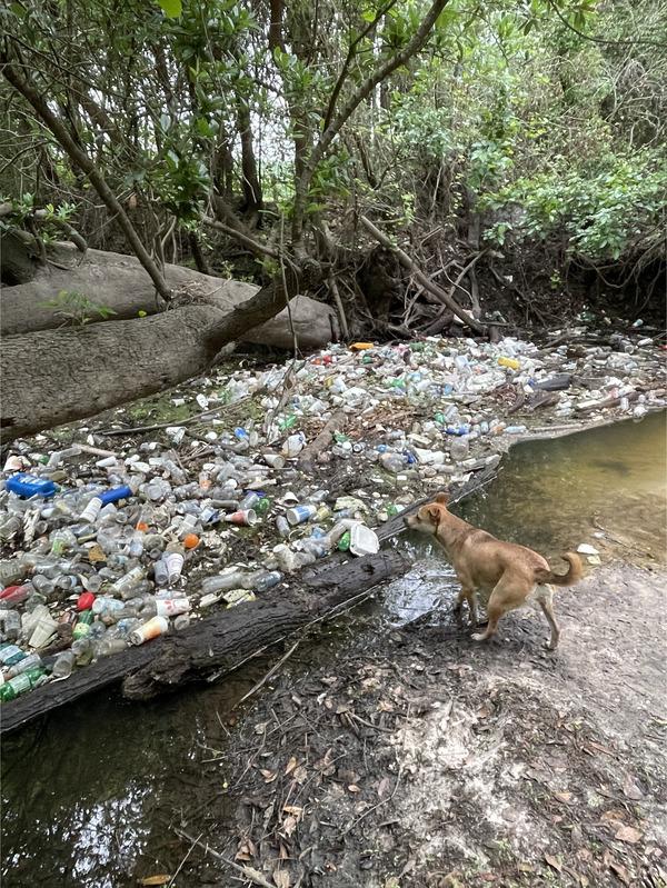 [Trash in Sugar Creek]
