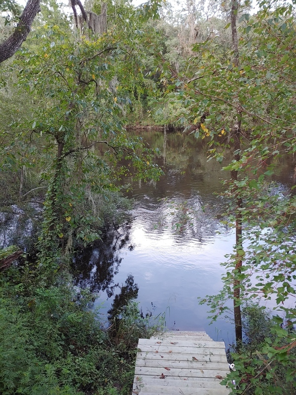 [Cleary Bluff, Withlacoochee River @ Withla Bluffs Way 2021-09-01]