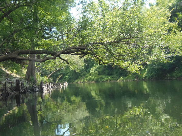 [Tree reaches middle of river, 12:21:11]