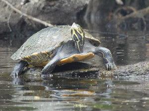[Turtles, 10:32:00]