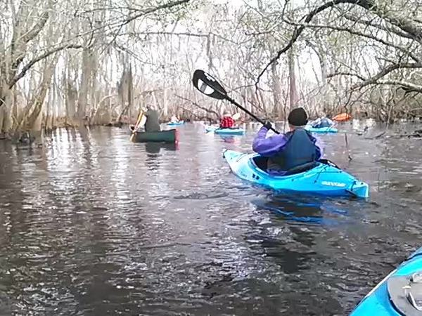 600x450 Movie: Under branches (1.0M), in Alapaha deadfalls, by John S. Quarterman, for WWALS.net, 17 January 2015