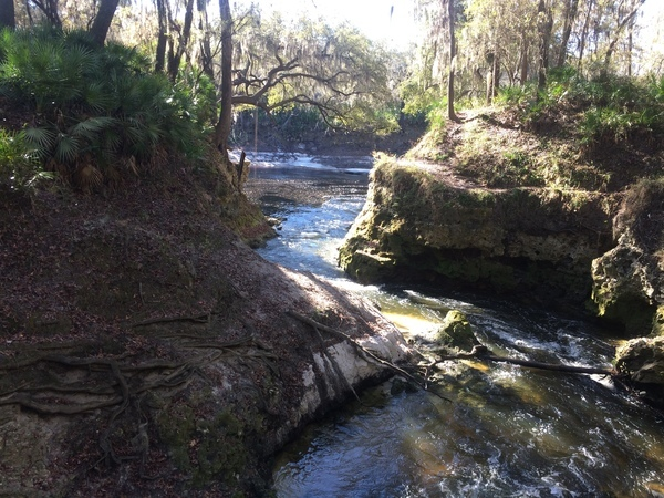 Confluence with Suwannee River