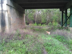 Yellow Dog under US 41 bridge 30.8931293, -83.3187027