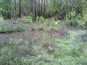 Even easier access southwest corner 30.8931293, -83.3187027