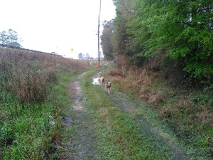 Here come the dogs 30.8943024, -83.3198547
