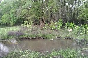 Movie: Yellow Dog and the pool by the river (2.3M)