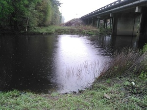 Easy Withlacoochee River access 30.8943024, -83.3198547