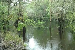 Movie: Flowing Withlacoochee River at US 41 (3.2M)