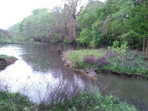 A still pool before the rushing Withlacoochee River 30.8931293, -83.3187027