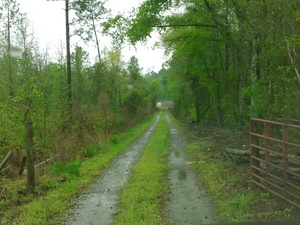 Gate on access road 30.8961964, -83.3201294