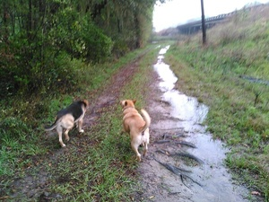 Can see the Withlacoochee River 30.8943024, -83.3198547
